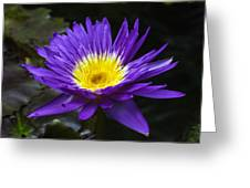 Indigo Water Lotus Greeting Card