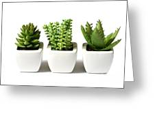Indoor Plants Greeting Card by Boon Mee