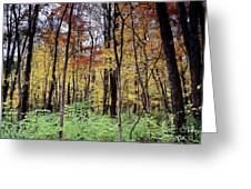 Infared Fall In Indiana Greeting Card