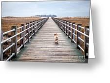 Infinite Boardwalk Run Greeting Card