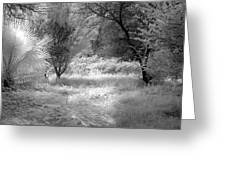 Infrared 3 Greeting Card