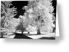 Infrared Delight Greeting Card