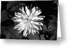 Infrared - Flower 03 Greeting Card