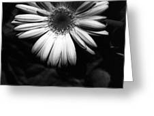 Infrared - Flower 05 Greeting Card