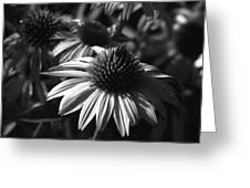 Infrared - Lucky Star Greeting Card