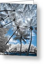 Infrared Palm Trees On The Coast Greeting Card