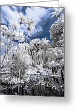 Infrared Pond And Reflections 2 Greeting Card