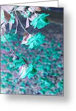 Infrared Roses Greeting Card