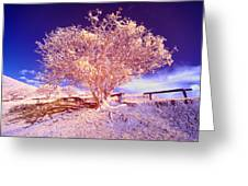 Infrared Tree Greeting Card