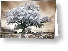 Infrared Tree On A Hill In Gettysburg Greeting Card by Paul W Faust -  Impressions of Light