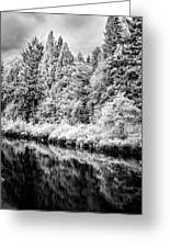 Infrared Trees Greeting Card