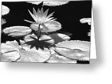 Infrared - Water Lily 02 Greeting Card