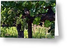 Inglenook Vineyard -11 Greeting Card