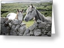 Inishmore Horses Greeting Card