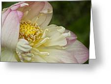 Inner Beauty Of The Lotus Greeting Card
