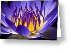 Inner Glow Greeting Card