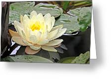 Inner Glow - White Water Lily Greeting Card