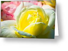 Inner Light Of Rose Greeting Card