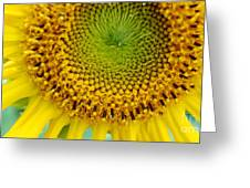 Inner Peace Forms Within This Sweet Yellow Sunflower Greeting Card