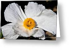 Innocent Krinkle - White Peony By Diana Sainz Greeting Card