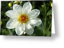 Innocent White Greeting Card