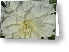Innocent White Dahlia  Greeting Card