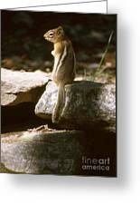 Inquisitive By Nature Greeting Card