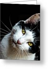 Inquisitive Kitty Greeting Card