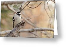 Inquisitive Woodpecker Greeting Card