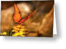 Insect - Butterfly - Just A Bit Of Orange  Greeting Card