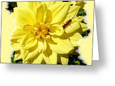 Insect On A Dahlia Greeting Card