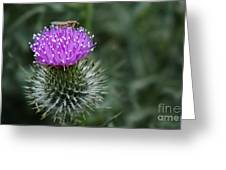 Insect On A Thistle Greeting Card