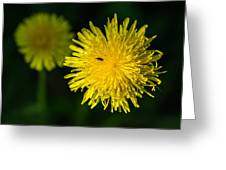 Insects On A Dandelion Flower - Featured 3 Greeting Card