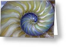 Inside A Nautilus Shell Greeting Card