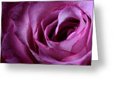 Inside A Rose Greeting Card