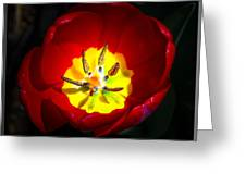Inside A Tulip Greeting Card