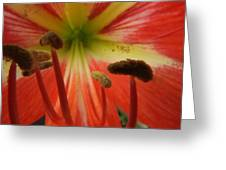 Inside Amaryllis Greeting Card
