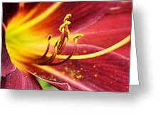 Inside Of A Lily Greeting Card
