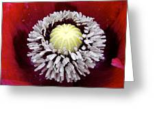 Inside Poppy Greeting Card