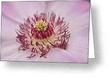 Inside The Flower Greeting Card