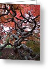 Inside The Japanese Maple Greeting Card
