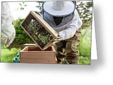 Installing Bees In A Hive Greeting Card
