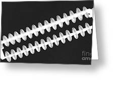 Insulators In Black And White Greeting Card
