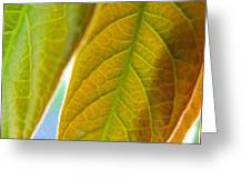 Interesting Leaves - Digital Painting Effect Greeting Card