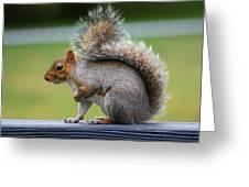 Interesting Tail Greeting Card