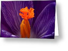 Interior Design Greeting Card