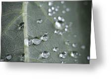 Into Every Life A Little Rain Must Fall Greeting Card