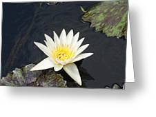 Into The Center...   # Greeting Card