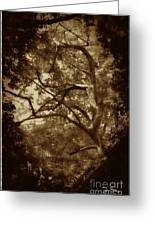 Into The Dark Wood Greeting Card