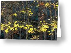 Into The Fall Greeting Card